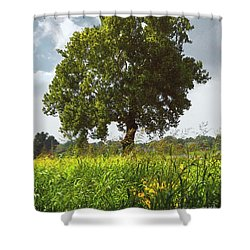 The Shade Tree Shower Curtain