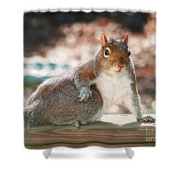Shower Curtain featuring the photograph The Show Off by Sue Melvin