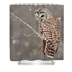The Silent Hunter Shower Curtain by Mircea Costina Photography