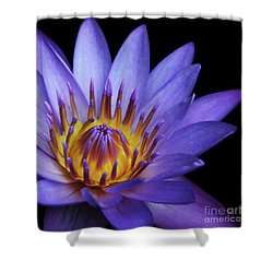 The Singular Embrace Shower Curtain by Sharon Mau