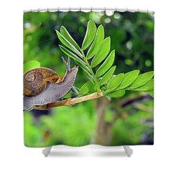 The Snail Shower Curtain