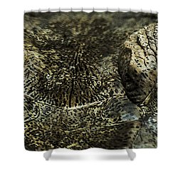 The Soul Searcher Shower Curtain by Paul Neville