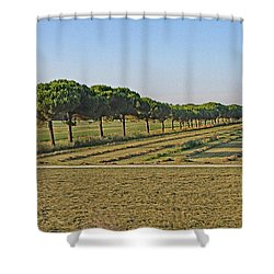 The Source Of Pine Nuts  Shower Curtain by Allan Levin