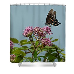 The Spicebush Swallowtail Of Prettyboy Reservoir Shower Curtain by Donald C Morgan