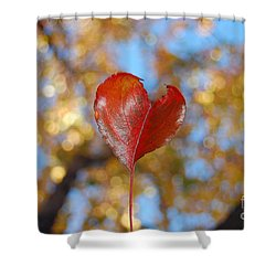 Shower Curtain featuring the photograph The Splendor Of Fall by Debra Thompson