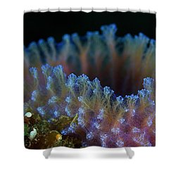 Shower Curtain featuring the photograph The Sponge by Rico Besserdich