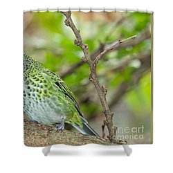 Shower Curtain featuring the photograph The Spotted Tanager by Judy Kay