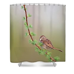 The Spring. Shower Curtain