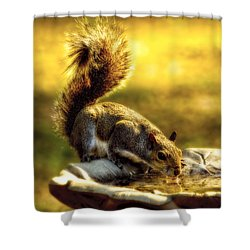 The Squirrel Shower Curtain