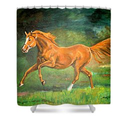 The Stallion-horse Art Painting  Shower Curtain