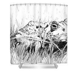 Shower Curtain featuring the drawing The Stalwart Old Toad by Andrew Gillette