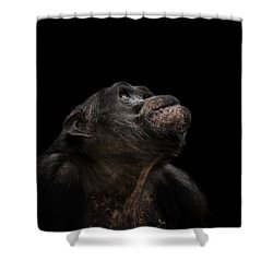 The Stargazer Shower Curtain by Paul Neville