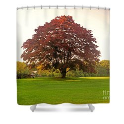 The Storybook Tree Shower Curtain