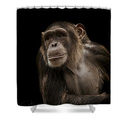 The Storyteller Shower Curtain