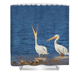 Shower Curtain featuring the photograph The Stretch by Kim Hojnacki