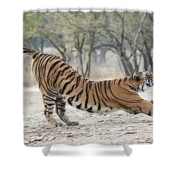 The Stretch Shower Curtain by Pravine Chester