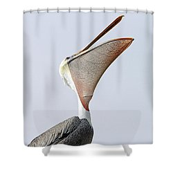 The Stretch  Shower Curtain by Shoal Hollingsworth