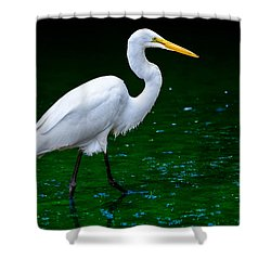 Shower Curtain featuring the photograph The Stroll by Brian Stevens