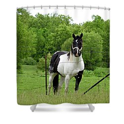 The Strong Horse Shower Curtain