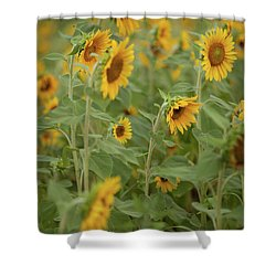 The Sunflower Patch Shower Curtain