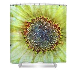 The Sunflower Shower Curtain by Tara Turner