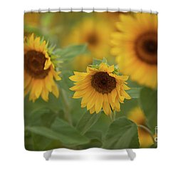 The Sunflowers In The Field Shower Curtain