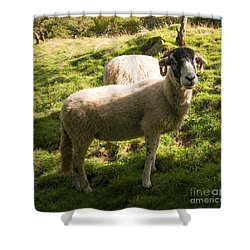 The Swaledale Shower Curtain