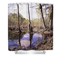 The Swamp Shower Curtain by Melissa Messick