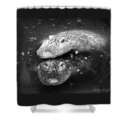 The Tao Of Dragons Shower Curtain