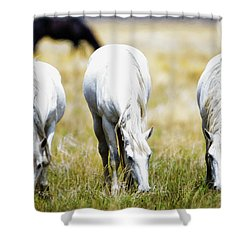 The Three Amigos Grazing Shower Curtain