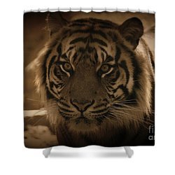 Shower Curtain featuring the photograph The Tiger by Lisa L Silva