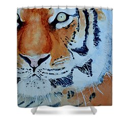 The Tiger Shower Curtain by Steven Ponsford