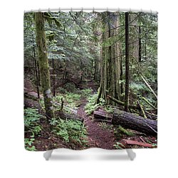 the Trail Shower Curtain by Rod Wiens