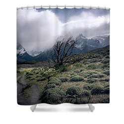 The Tree In The Wind Shower Curtain by Andrew Matwijec