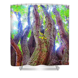 The Tree Of Salem Shower Curtain by Patricia Arroyo