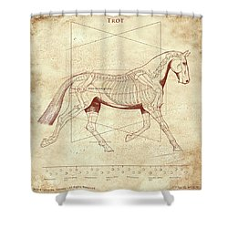 The Trot - The Horse's Trot Revealed Shower Curtain by Catherine Twomey