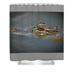 The Two Dragons Shower Curtain