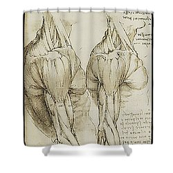 The Upper Arm Muscles Shower Curtain by James Christopher Hill