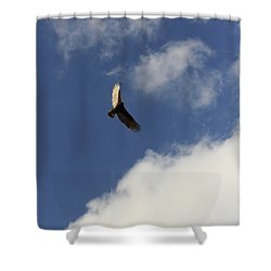 Shower Curtain featuring the photograph The View  by Kim Henderson