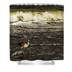 The Wading Willet  Shower Curtain