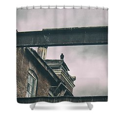 The Watcher Shower Curtain by Off The Beaten Path Photography - Andrew Alexander