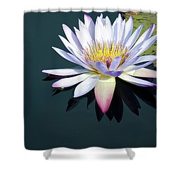 The Water Lily Shower Curtain by David Sutton