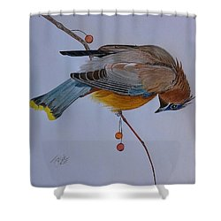 The Waxwing  Shower Curtain