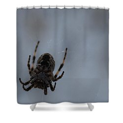 Shower Curtain featuring the photograph The Webs We Weave by Ramona Whiteaker