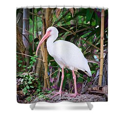 Shower Curtain featuring the painting The White Ibis by Judy Kay