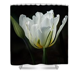 The White Tulip Shower Curtain by Richard Cummings