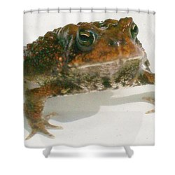 Shower Curtain featuring the digital art The Whole Toad by Barbara S Nickerson