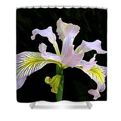 The Wild Iris Shower Curtain