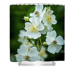 Shower Curtain featuring the photograph The Wild Rose by Mark Dodd