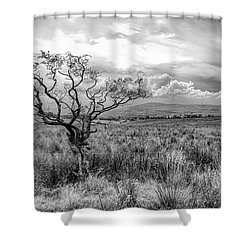 The Windswept Tree Shower Curtain